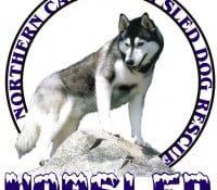 Sled_Dog_Rescue